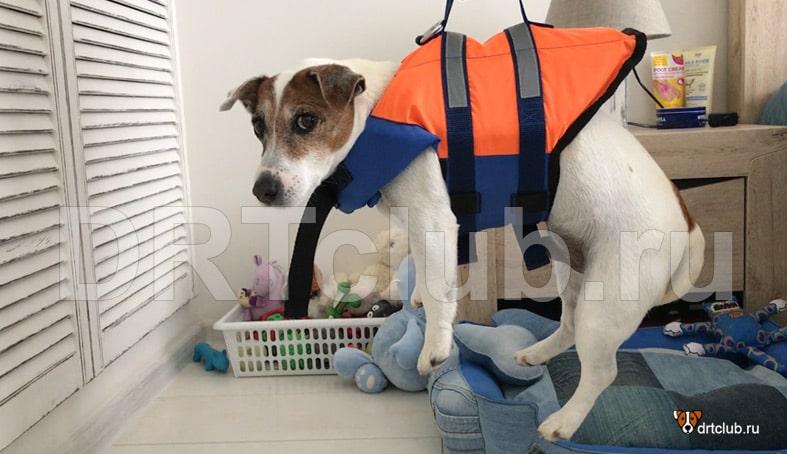 Плавательный жилет для собак своими руками