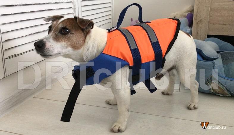 Спасательный жилет для собаки своими руками