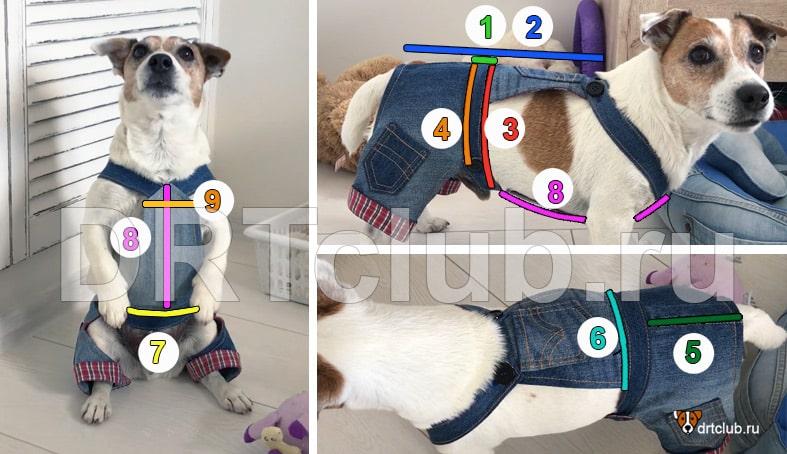Мерки для построения джинсового комбинезона для собаки