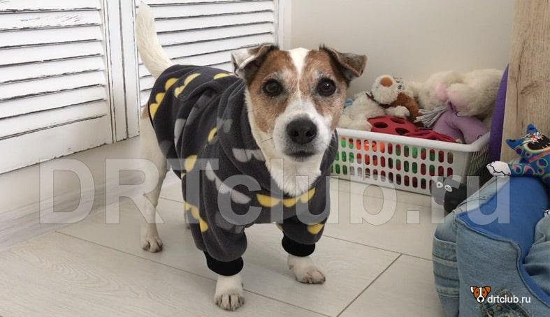 Собака в тёплом худи